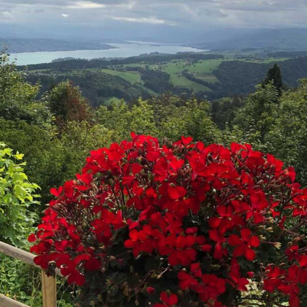 Impression rote Blumen mit Aussicht